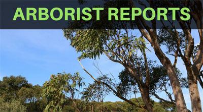 arborist reports sydney