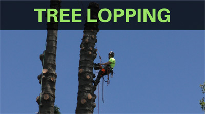 tree lopping company