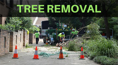 tree removal services sydney