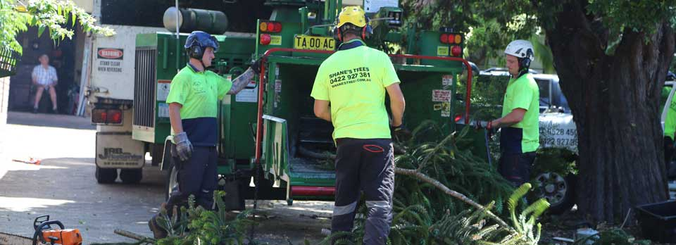 local-government-tree-removal-company