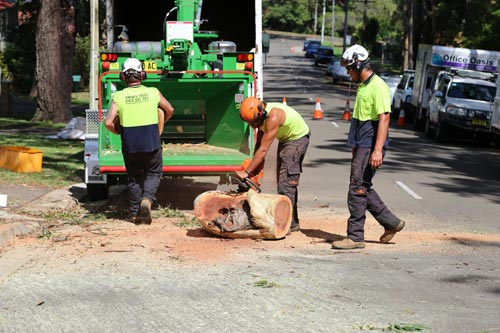 tree-lopping-company-heathcote-sutherland-shire