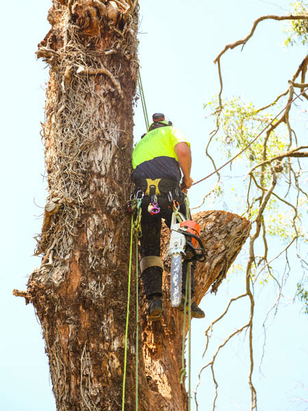 Arborist Service Sydney | What Should You Know? | Shane's Trees