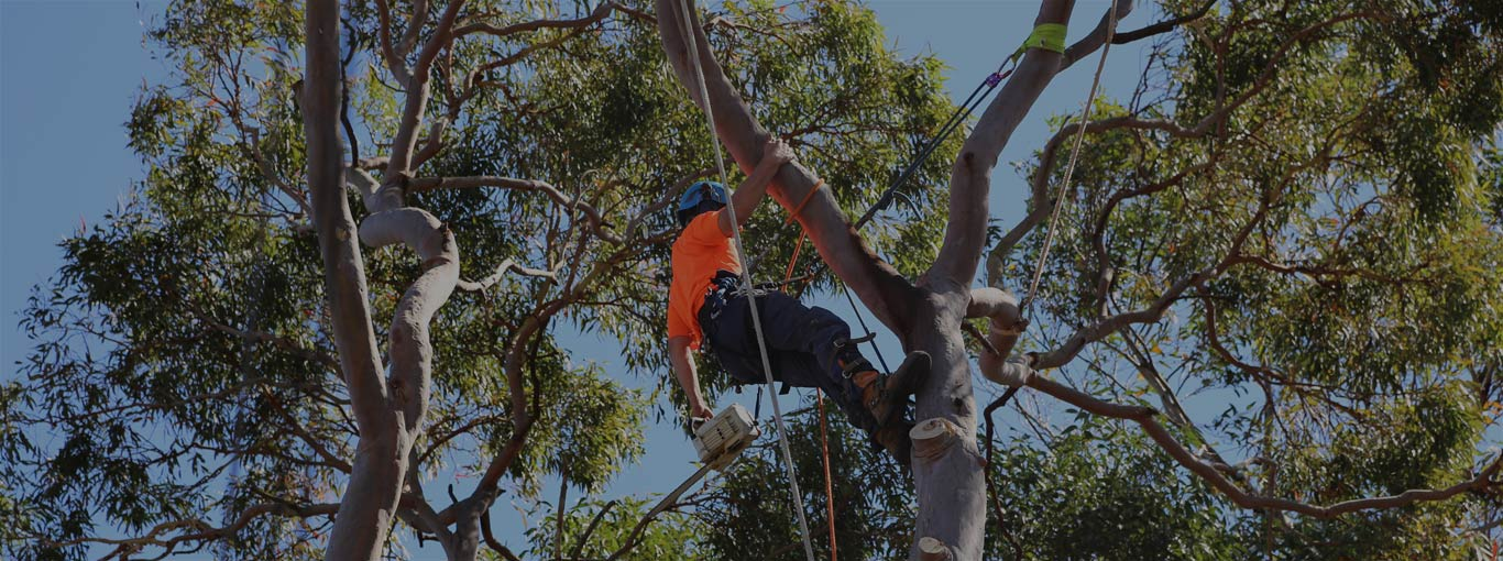 Tree Lopping Service