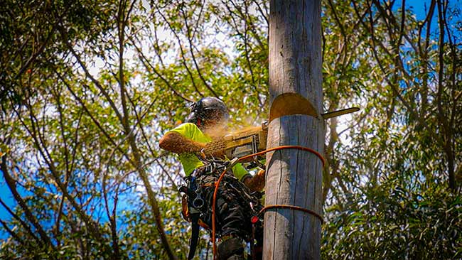 Our Arborist blocking down a tree ready for removal